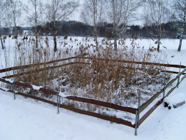 constructed wetlands at winter