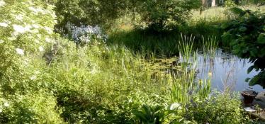 Schwimmteich mit Pflanzen