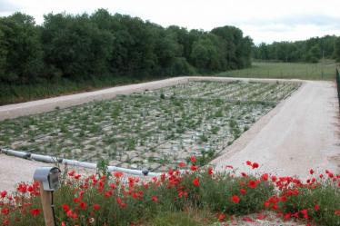 french system - bewachsene Bodenfilter mit Rohschlammbeschickung